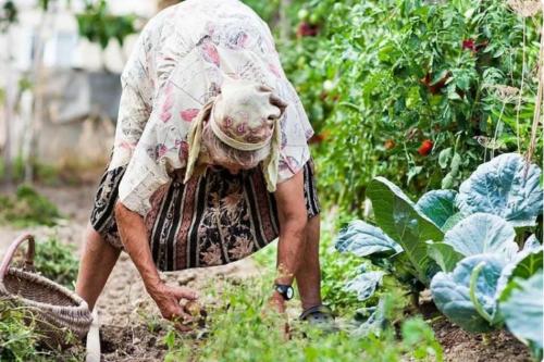 Привычки, которые в огороде не приносят пользу. Ничего не потеряла, перестав тратить на них время