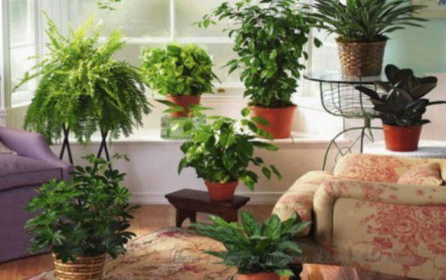 Хотите в своей квартире шикарный цветник? Тогда запоминайте эти секреты